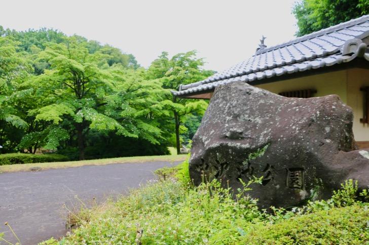 中沢池公園の花菖蒲