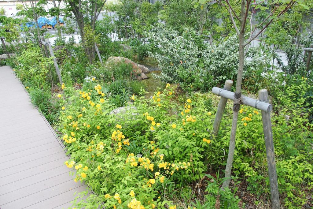 長谷工マンションミュージアムのビオトープ(庭園)