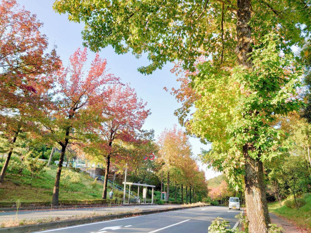 多摩市公式 紅葉スポットまとめ 上之根大通り(モミジバフウ/アメリカ楓)